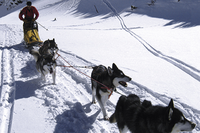 Dog sledges in Slovakia