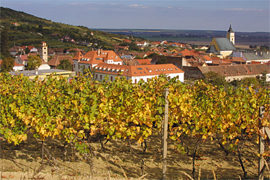 Vineyards Slovakia