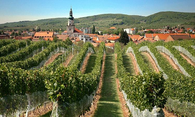 Vineyards near Bratislava